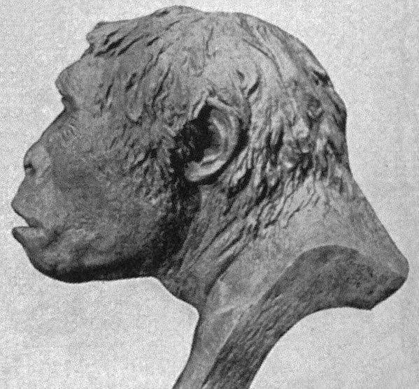 Homo Erectus Javanicus, orang pribumi asli di Nusantara yang sudah punah (Ist)